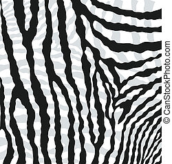 vector abstract skin texture of zebra