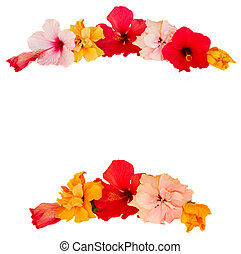 hibiscus flower frame - frame of multicolored hibiscus...