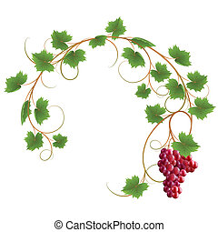 Vine - Red vine on a white background