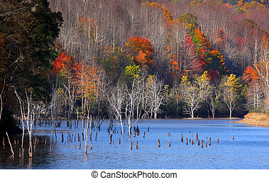 End of autumn - Few trees with colorful leaves in end of...