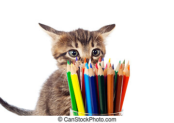 Tabby kitten sniffing color pencils in glass, isolated on...