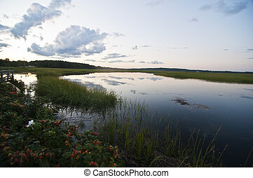 marsh and water in Maine, USA