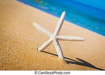 Starfish, Shell on the Beach - Starfish, Shell on Tropical...