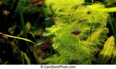 neon fish - Aquarium