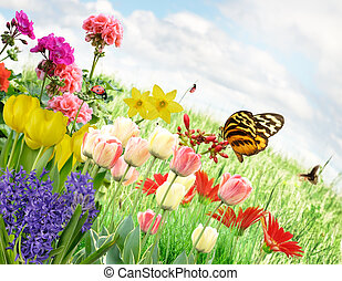 Spring Flowers - Colorful Spring Flowers And Grass Against A...