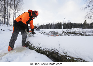lumberjack in action, snowy winter - lumberjack, woodcutter...