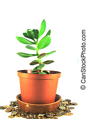 Money Tree as symbol of wealth