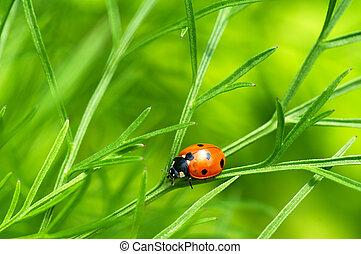 Ladybug over green