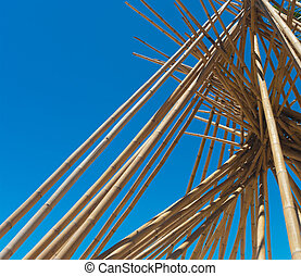 bamboo poles - many bamboo poles on a beach as protection...
