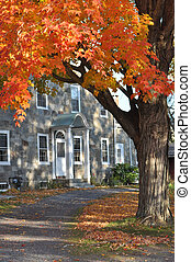 Brilliant foliage in New England - Brilliant foliage frames...