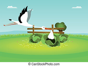 Stork Delivering Baby In Cabbage
