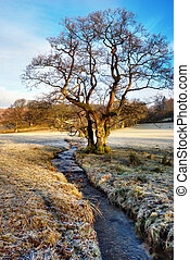 Bare Winter Tree Alongside Stream - Bare winter tree with...