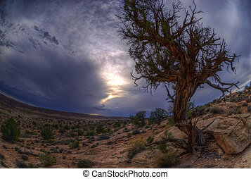 Desert Tree - A lonely dry tree against a storm desert...