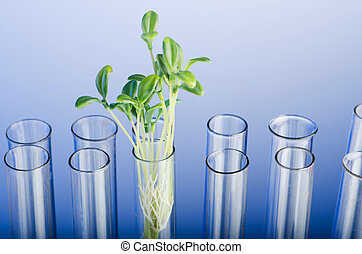 Experiment with green seedling in lab