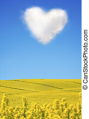 Oilseed and a heart shaped cloud