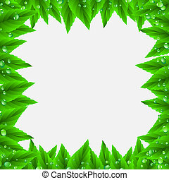 Frame of green leaves and drops.Vector eps10