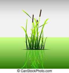 Eco conceptGrass green reed,vector eps 10