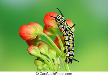 cute caterpillar - red flower and cute caterpillar