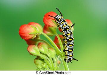 cute caterpillar - red flower and cute caterpillar