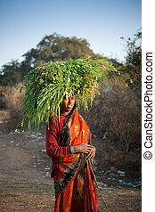 Indian villager woman carrying gree - Indian happy villager...