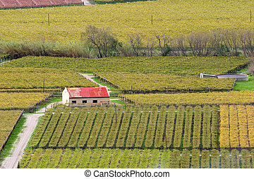 Vineyard landscape