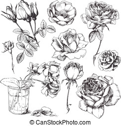 Flower set - Vector illustration with hand-drawn rose set