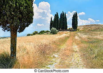 Small cemetery in Tuscany - Scenic view of typical Tuscany...