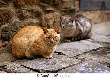 Two cats sitting in a dark alley