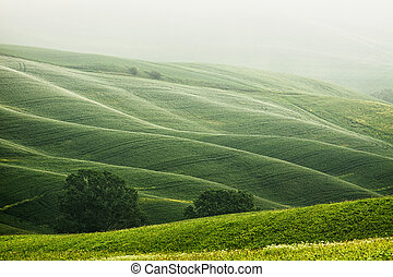 Hilly landscape of Tuscany in the Mist