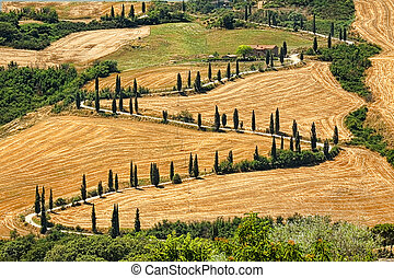 Winding road - Beautiful landscape in Tuscany with sinuous...