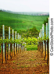 Landscape in Tuscany - vineyard - Llandscape in Tuscany -...