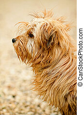Cute small dog - Portrait of small and cute dog