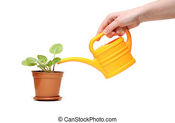 closeup hand watering a plant with watering can - closeup...