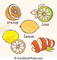 Citrus doodle set - Citrus orange, lemon, lime, grapefruit...