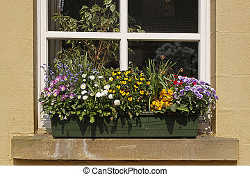 Window with flowers in Germany - Flowerpot with flowers in...