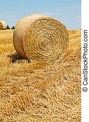 agriculture. field with straw bales