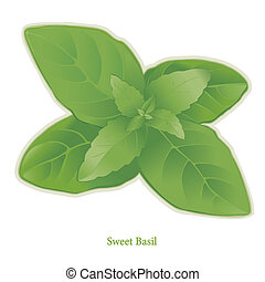 Sweet Basil Herb - Sweet Basil, popular herb, aromatic...