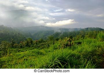 grün, Hügel,  bali