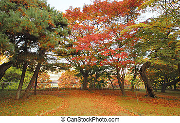 colorful  leaves in park Iwate