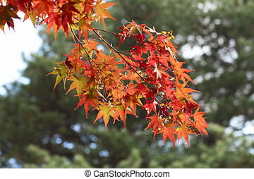 colorful leaves in par Iwate - colorful leaves in park Iwate...
