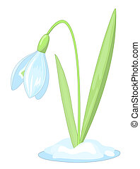 snowdrop(20).jpg - Snowdrop on the white background. Vector...