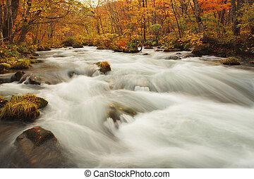 Autumn Colors of Oirase River, located at Aomori Prefecture...