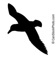 silueta, mar, pássaro, branca, fundo