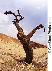 Dry tree of the freakish form in desert