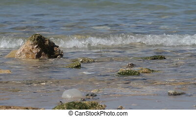 Beach of Tel Aviv. - Waves and stones on the beach of Tel...