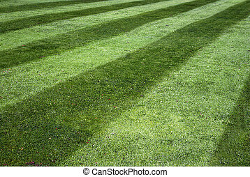 Stripy lawn - Background of green lawn with stripes