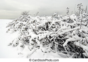 Bush covered by snow in the park