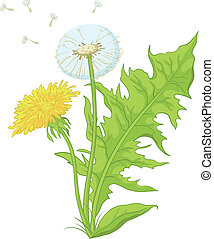 Flowers dandelions with leaves - Flowers dandelions with...