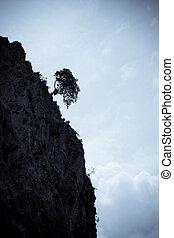 Tree on the cliff