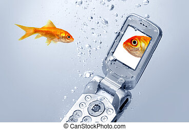 A goldfish swims by a cell phone, A picture of a friend is...